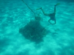 Underwater upside down bowline. YES.  (Photo by Megan Juran)
