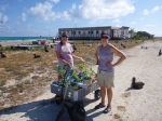 Megan and Cat with a cart full of Naupaka seedlings that are ready to be outplanted in the colony. (Photo by Meg Duhr)