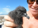 Megan with a Bulwer's petrel chick ready for banding. (Photo by Ryan Potter)