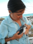Meg holding an adorable Bonin petrel chick. (Photo by Ryan Potter...or possibly Sarah Youngren)
