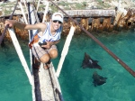 Ryan and spotted eagle rays at the dolphin on Tern.