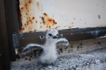 This plucky little white tern chick miraculously survived the storm. Hopefully its parents did, too.